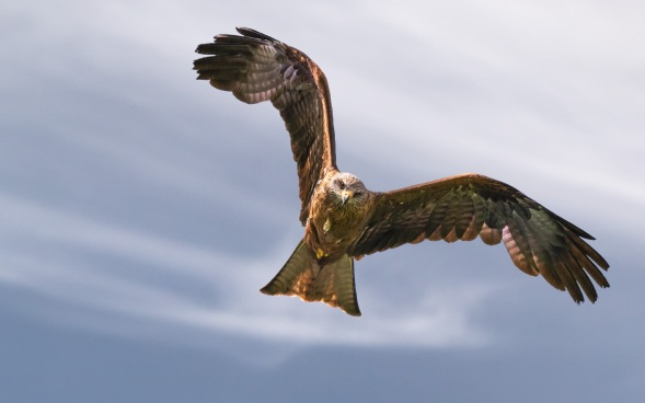 Framing Places - Guild Qualified - Red Kite