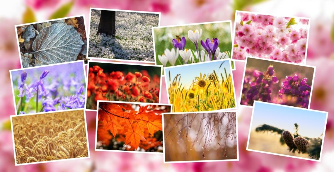 "Framing Places Photography: ""Seasons 2021"" wall calendar"